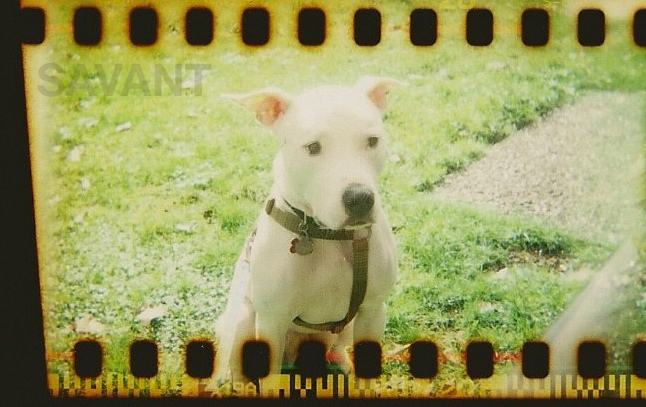 Orion The Dog