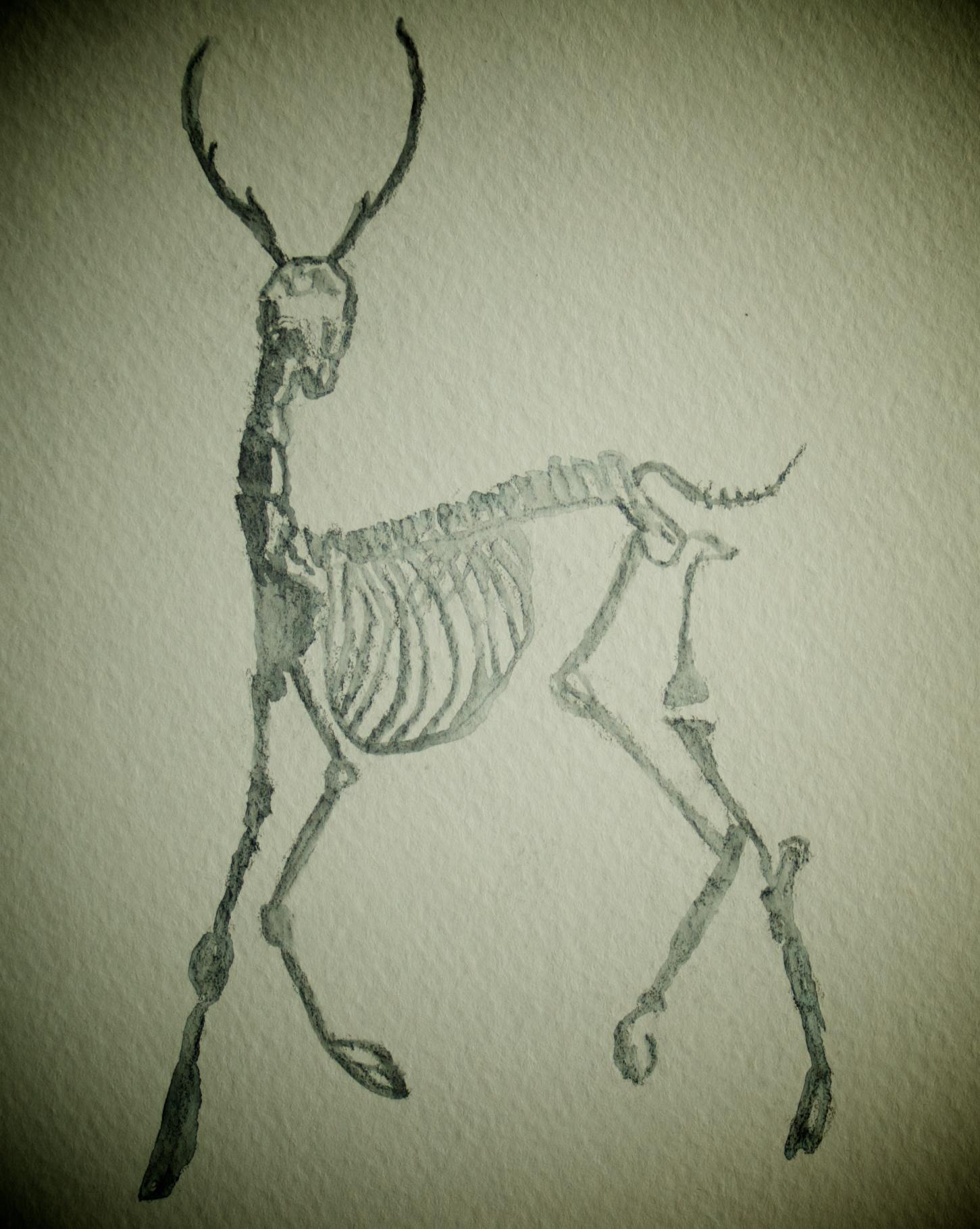 Bone Series Deer