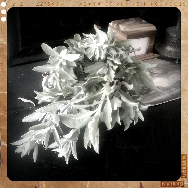 Sage Harvest